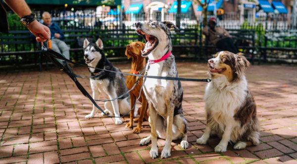 dog-group