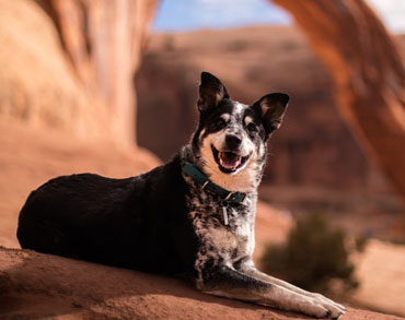 Aussie in grand canyon