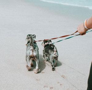 Dual Dog Walk